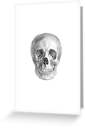 Albinus Skull 01 - Back To The Basic - White Background by sivieriart