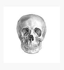 Albinus Skull 01 - Back To The Basic - White Background Photographic Print