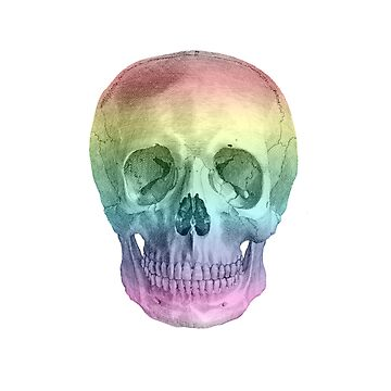 Albinus Skull 02 - Over The Rainbow - White Background by sivieriart