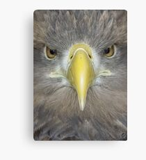 Sea Eagle  Canvas Print