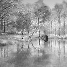 Infrared reflections by Robin Whalley