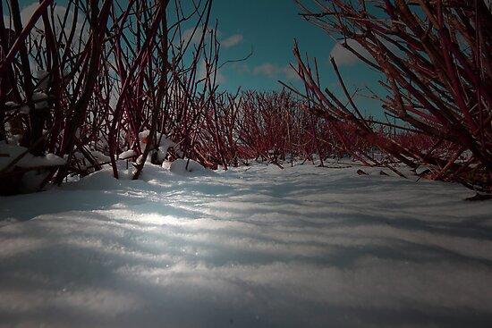 SHADOWS OF WINTER by leonie7