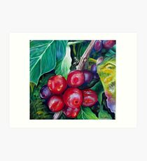Cafe Costa Rica Art Print