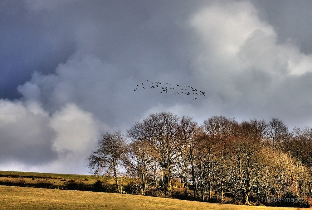 Flock by Thistle Images