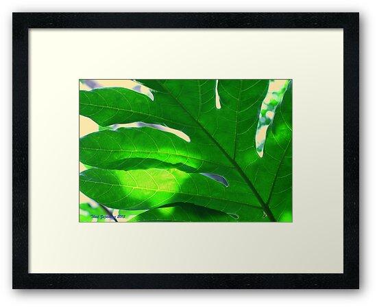 Leaf and sky by Thad Zajdowicz