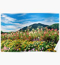 Flowers and Flatirons Poster