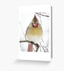 What's This?!!! More Flakes?!!! Where's Spring?!!! Greeting Card