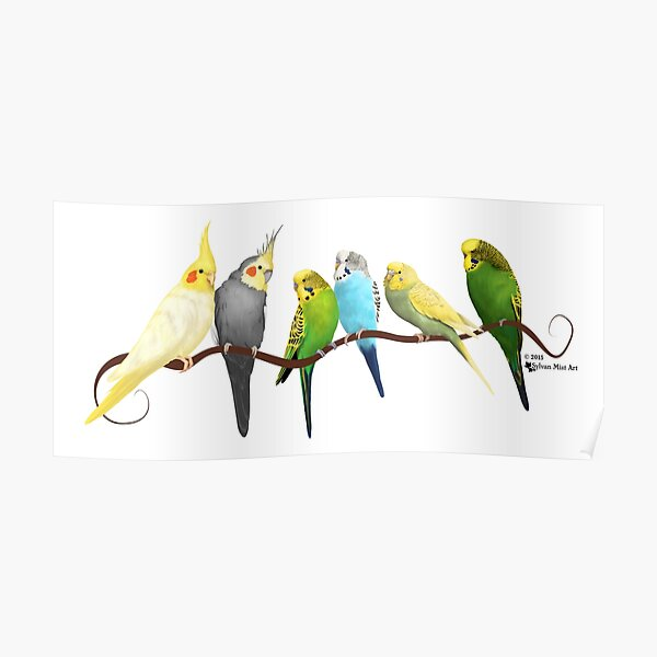 Small parrots Poster