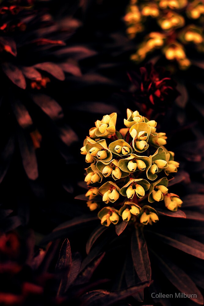 Nature's Jewels by Colleen Milburn