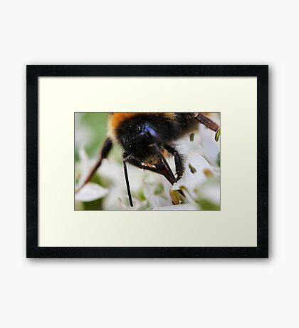 Bee nice to me or else....... Framed Print