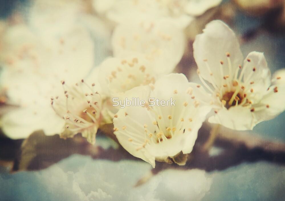 Golden Light Cherryblossom by Sybille Sterk