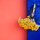 Bouquet on Blue by Steve Outram