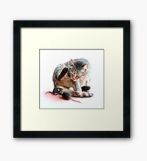 Playing cat and mouse Framed Print