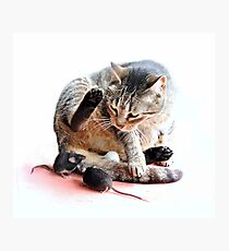 Playing cat and mouse Photographic Print
