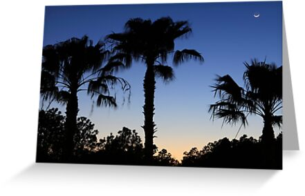 Florida Palms with Crescent Moon by Carol Bailey-White