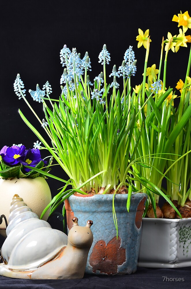 Easter flowers and a snail by 7horses