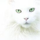 It is in their eyes.... by ibjennyjenny