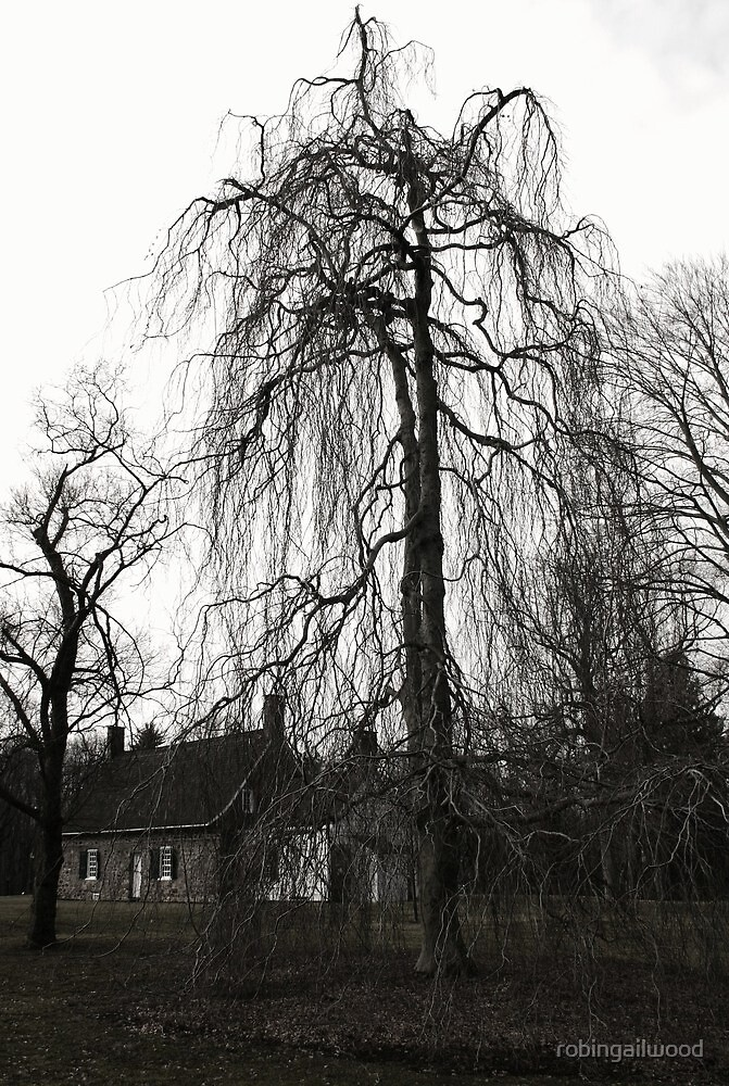 tree at deWint house by robingailwood