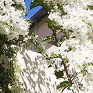 White Bougainvillea - 16 03 13 - Five by Robert Phillips