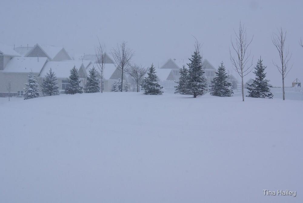 Snowing Back Yard  by Tina Hailey