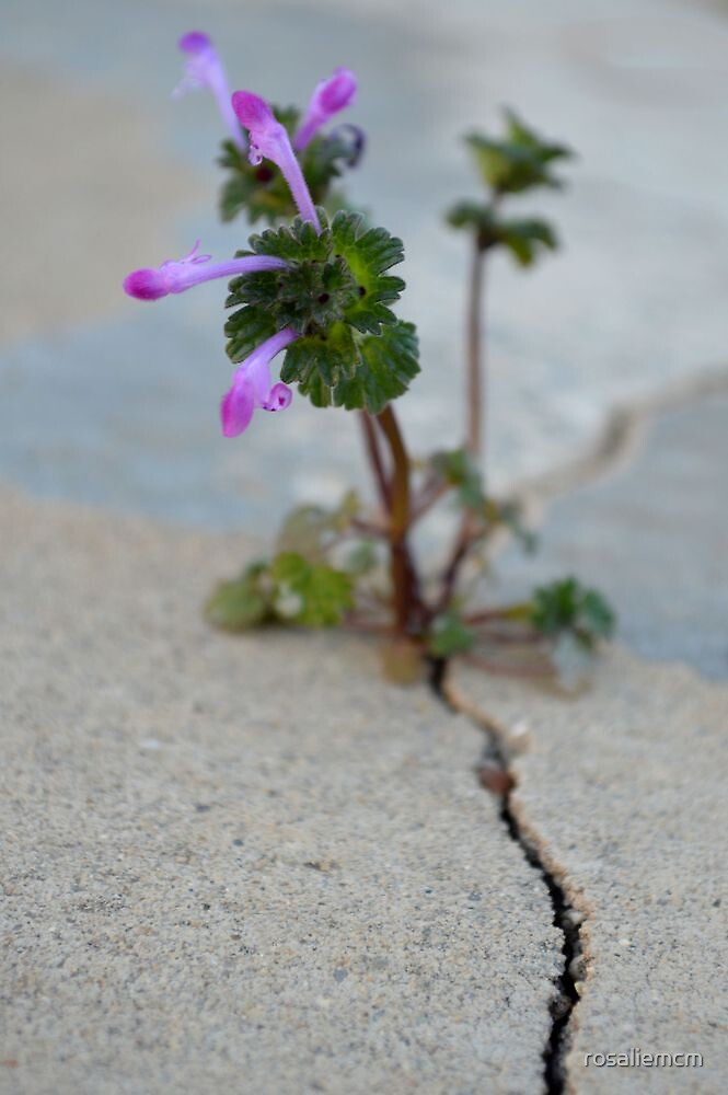 Life Finds A Way by rosaliemcm