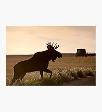 Prairie Moose Photographic Print