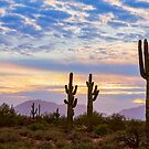 Just Another Colorful Sonoran Desert Sunrise by Bo Insogna