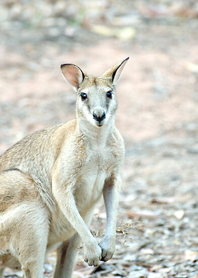 What's Up? - wallaby by Jenny Dean