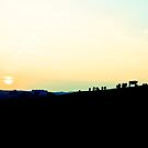 Cows at sunset by Greg  Walker