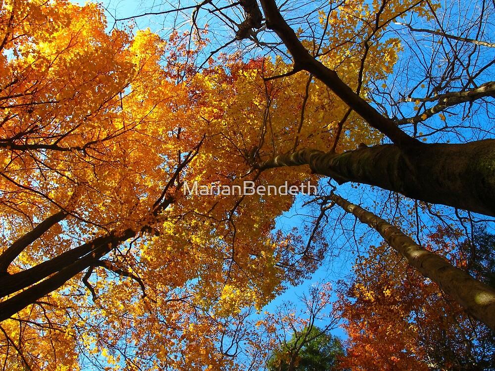 October brilliance by MarianBendeth