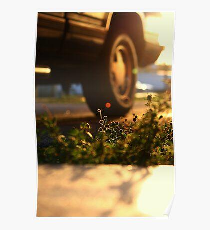 Grass's last light Poster