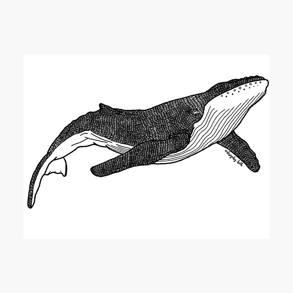 Whale Photographic Print