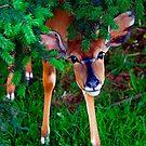 Peek-a-Boo by Stuart Robertson Reynolds
