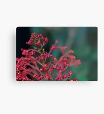 Red Flower Buds Metal Print