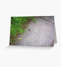 Sandgroper On The Footpath - 19 03 13 Greeting Card