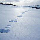 Footprints in the snow by Greg  Walker