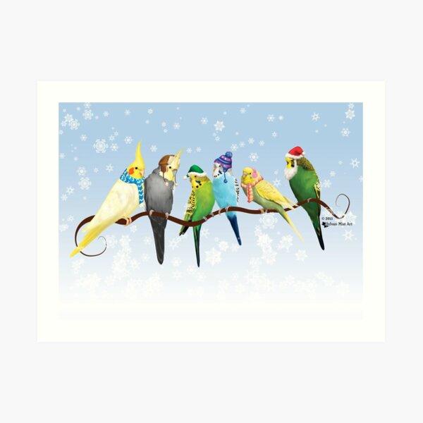 Winter Parakeets & Cockatiels Art Print