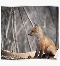 A Cute Kit Fox Portrait 2 Poster