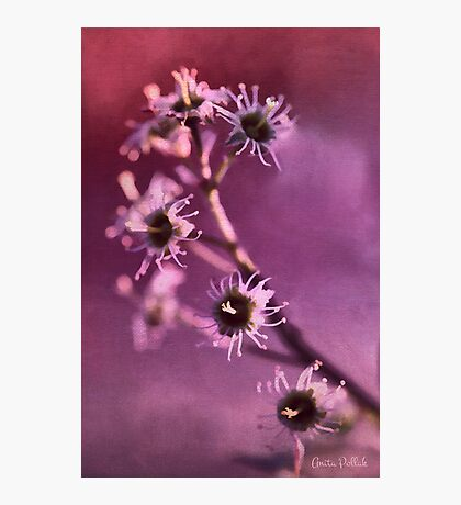I'm Still Pretty Without My Petals! Photographic Print