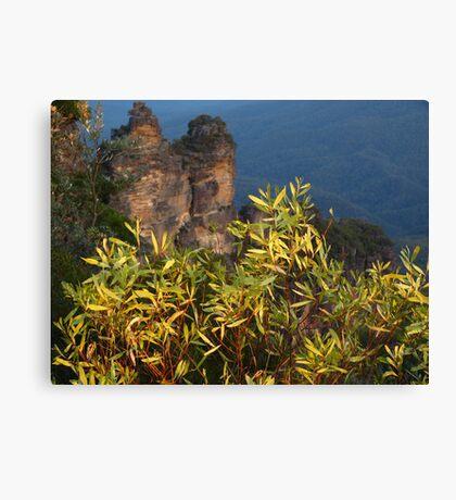 Blue Mtns National Park Canvas Print