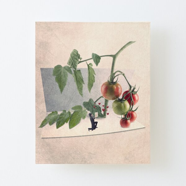 tomatoes illustration Canvas Mounted Print