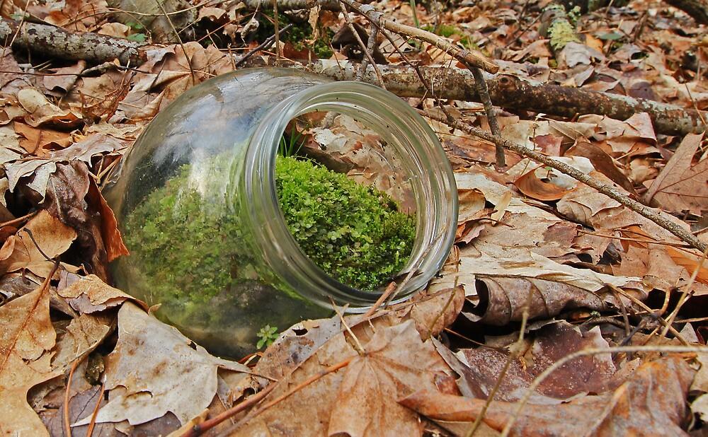 Nature's Terrarium by Lynn Gedeon