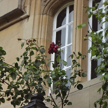 Flowers on a Window by facingthewindow