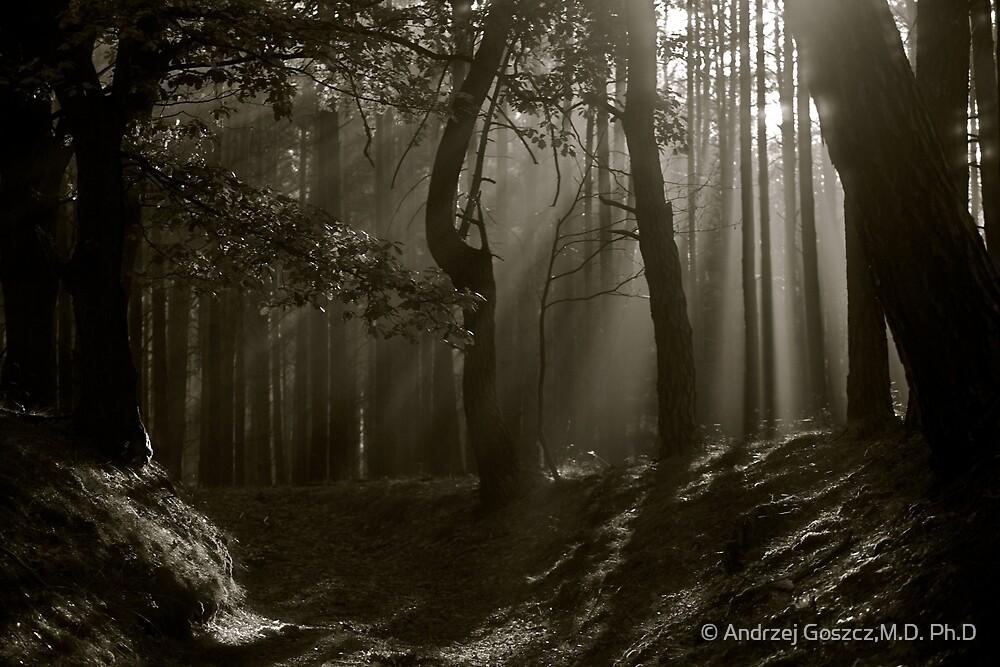 Phenomenal  Black and White  ##  Contrasting ## Perceptions . by Dr.Andrzej Goszcz . 2376 views . Thx! Featured in 5D Mark II . by © Andrzej Goszcz,M.D. Ph.D