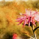 Pink Flower by leapdaybride