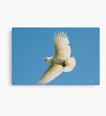 High Flyer - white cockatoo Canvas Print