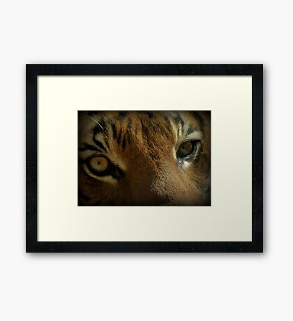 Malayan Tiger Up Close (Critically Endangered) Framed Print