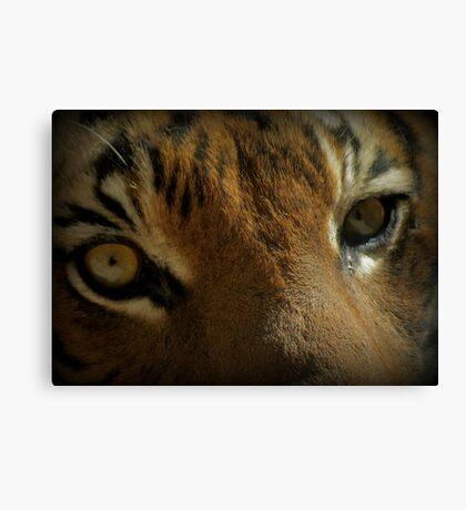 Malayan Tiger Up Close (Critically Endangered) Canvas Print