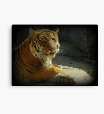 Malayan Tiger (Critically Endangered)  Canvas Print