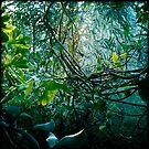 Underwater garden 1 by Aneta Bozic